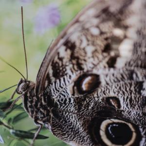 """""""I Spy a Butterfly"""""""
