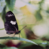 Photo print on metal of a closeup of a butterfly on a thin leaf with a blurred out background